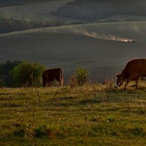 podvečer na vidieku