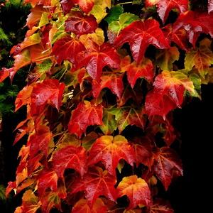 jesenný závoj....