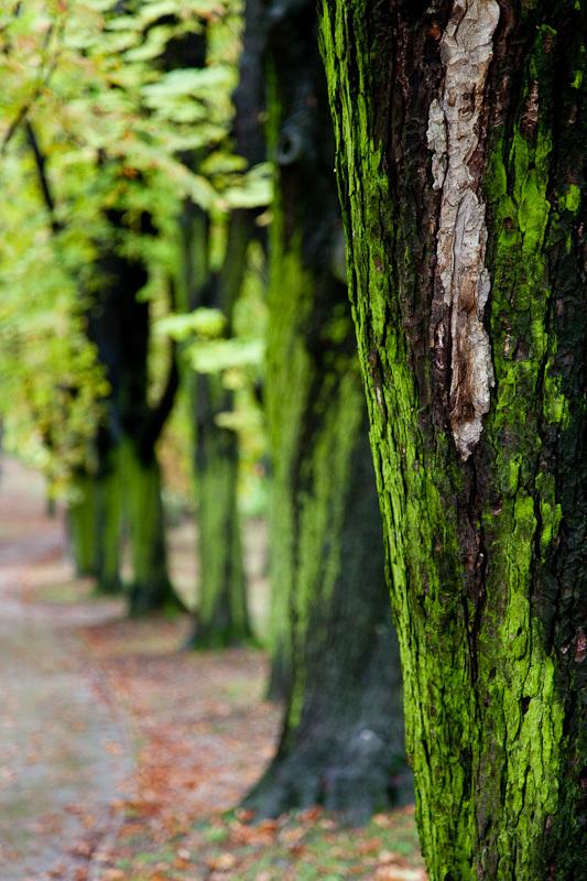 Zelená nálada