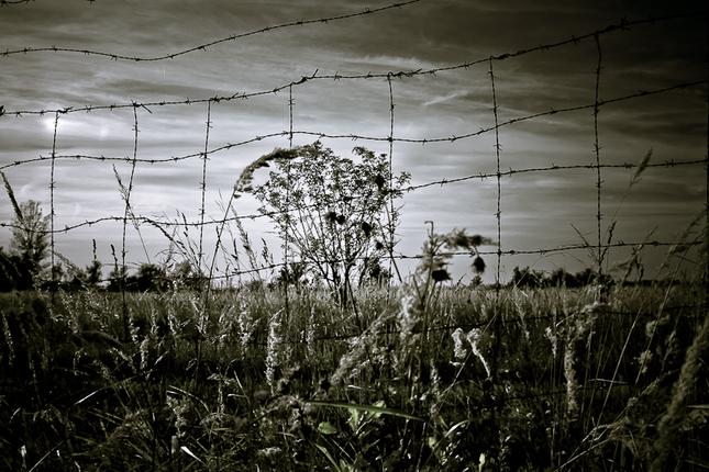 pohlad spoza plotu