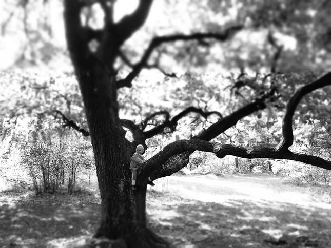 Carovny strom