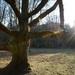 strom, ktorý už jar neprebudí