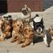 Súboj psov