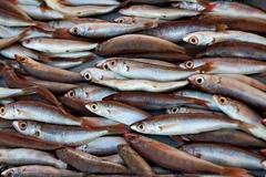Rybky na trhu