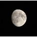 Mesiac počas tropickej noci