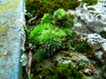Čas zelene