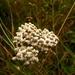 Hniezdo kvetov