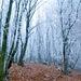 Prechádzka zimo-jeseňou