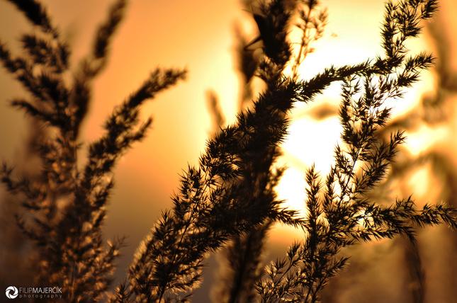 Západ slnka v poli