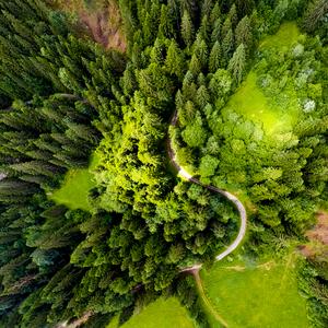 Nad lesom
