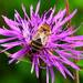 Včielka na výprave