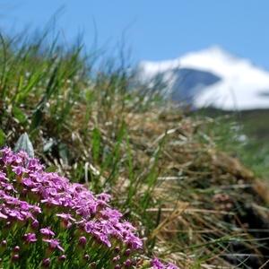 jar na horách