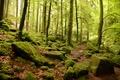 prechádzkou v lese