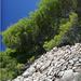 Chorvatske borovice