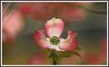 Stromový kvet