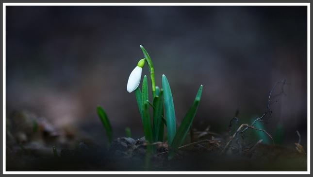 Jarná predzvesť........