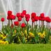 jarna zahrada