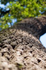 zdravy strom