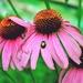 Kvety a chrobáčik