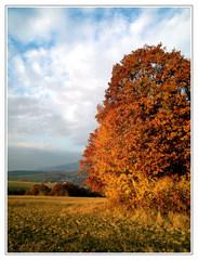 Posledná jesenná