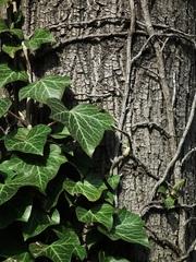 Strom a brečtan