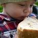 ukradnuty chlieb pre sliepky:-)
