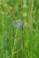 Motýľ a tráva - tajomstvo ukryté
