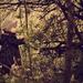 Dáma v lese