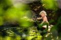 Návrat do Zelenej lagúny
