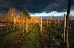 zákutia viničné II