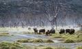 krajina suchých konárov
