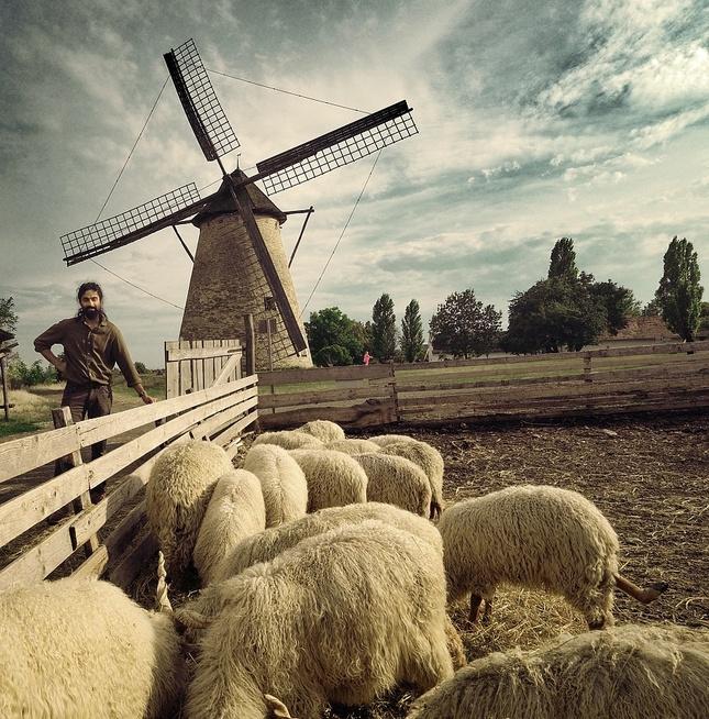 správca ovčieho mlyna