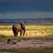 sloní dôchodca