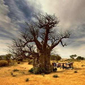 v tieni baobabov II.