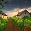 večery vo vinici VI.