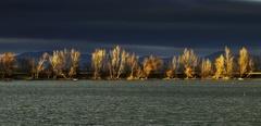 svetlo rybníkové