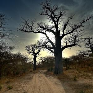v tieni baobabov I.