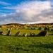 Beaghmore stone circles II.