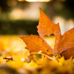 Jesenná láska
