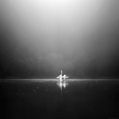 Labutie jazero