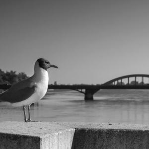 Piešťanské mosty