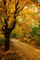 jesenná cestička