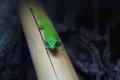 Zelený na bambuse