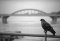 Z mosta do prosta