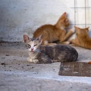 Niečo o mačkách