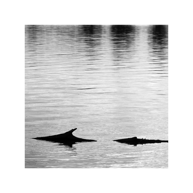 DARK SHARK