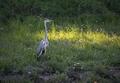 Prekvapenie v tráve