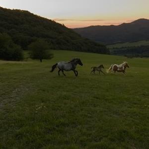 Zo západu kone bežia....