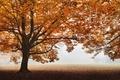 Hmlisté rána jesenné ...