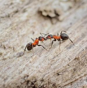 Príbeh mravca - stretnutie